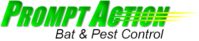 Hayward Pest Control Services